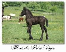 Bluet du Petit Verger