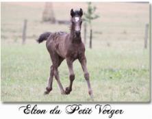 Elton du Petit Verger