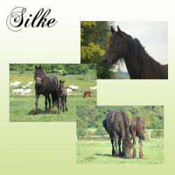 Présentation et photos de Silke