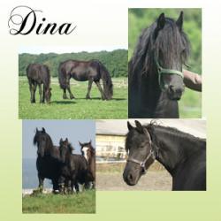 Présentation et photos de Dina